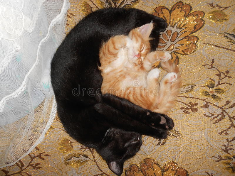 Black and red cats royalty free stock photo
