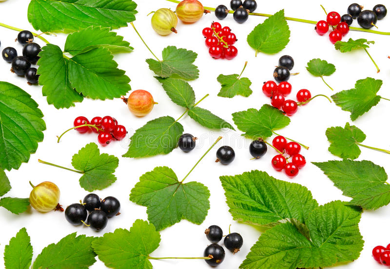 Black and red currants, gooseberries and leaves isolated on whit royalty free stock photos