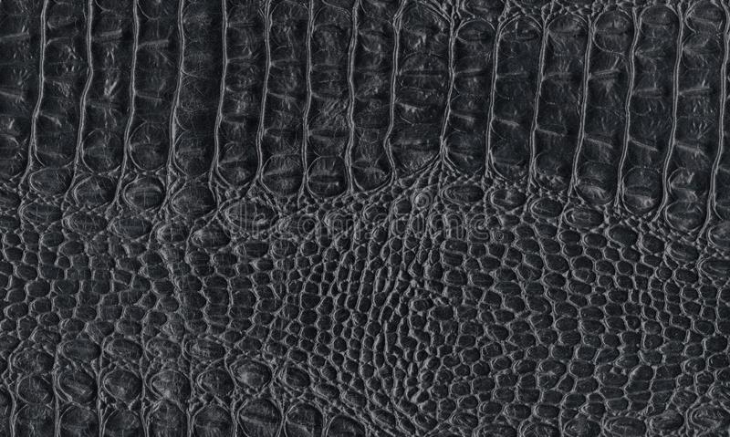 Black reptile natural leather texture. Snake, crocodile or dragon skin pattern. Element for design. Medieval, exotic or fantasy background stock photography