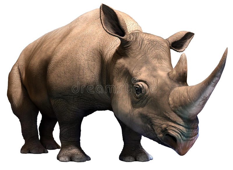 Black rhino vector illustration