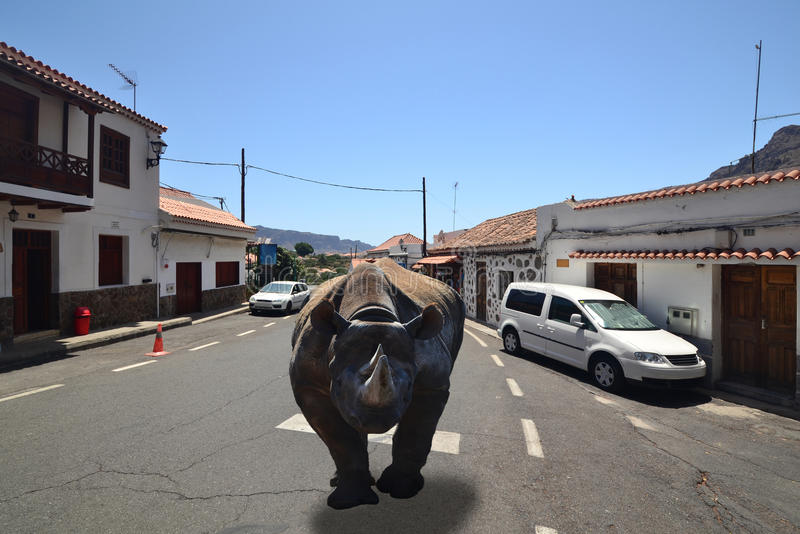 Black rhino running through the streets of a small town stock image