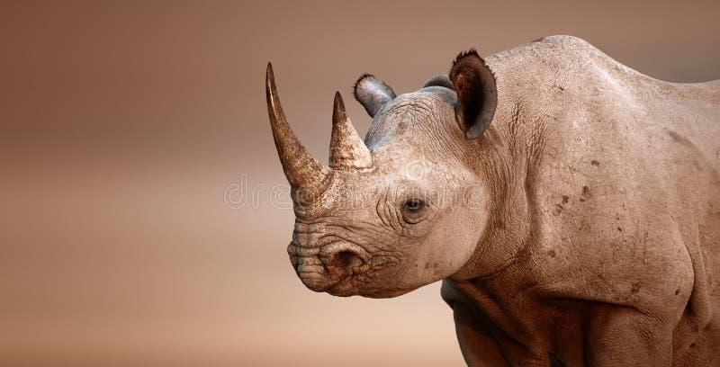Black Rhinoceros portrait stock image