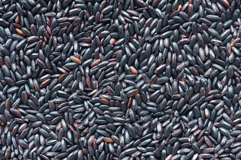 Black rice arkivbilder