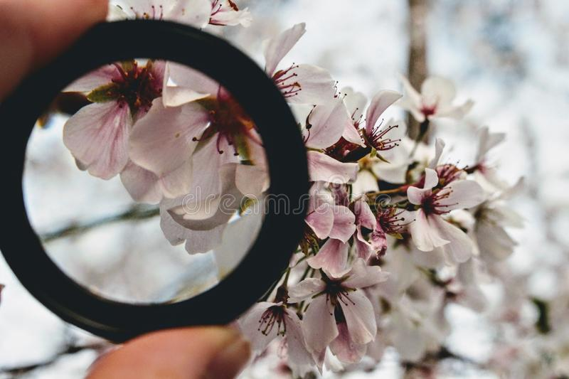 Black Ring in Front of White Orchid Selective Focus Photography stock photos