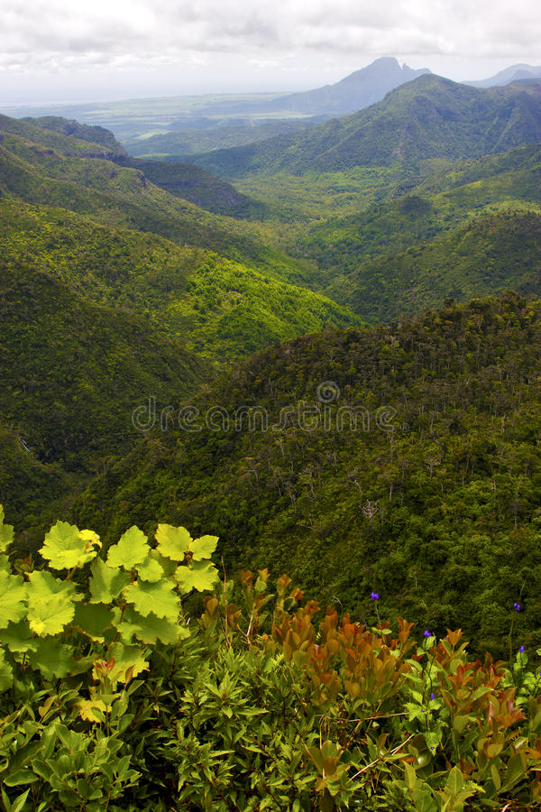 Black river mountain in mauritius. Africa water fall gran riviere stock photography