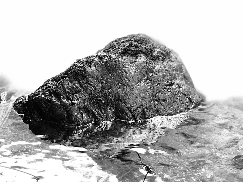 Black rock in a river, white background stock image