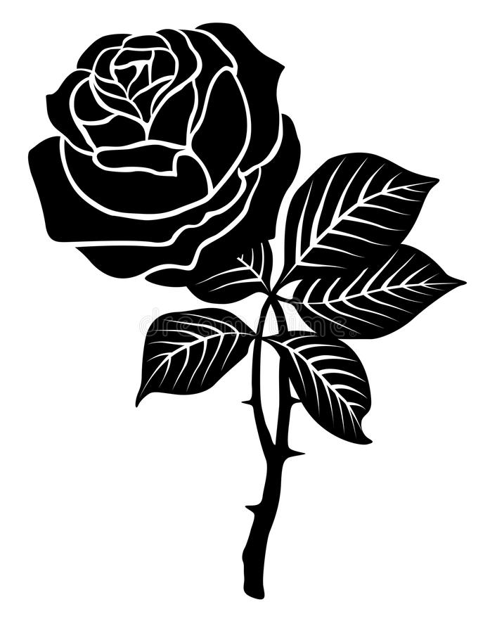 Black rose stock vector illustration of black retail for How to draw a black and white rose