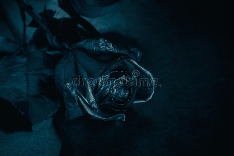 Black Rose. Concept, symbol of sorrow, melancholy and sad mood. Depression, farewell and love. St. Valentine& x27;s Day stock images
