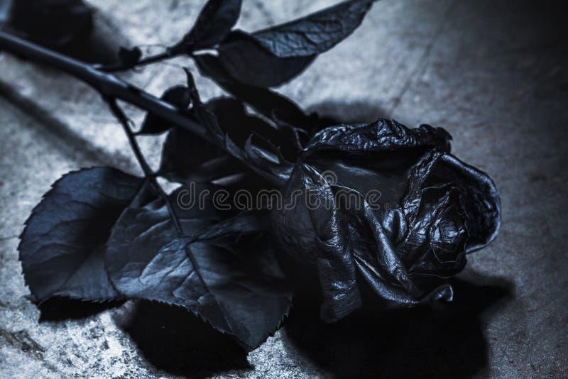 Black Rose Concept Symbol Of Sorrow Melancholy And Sad Mood