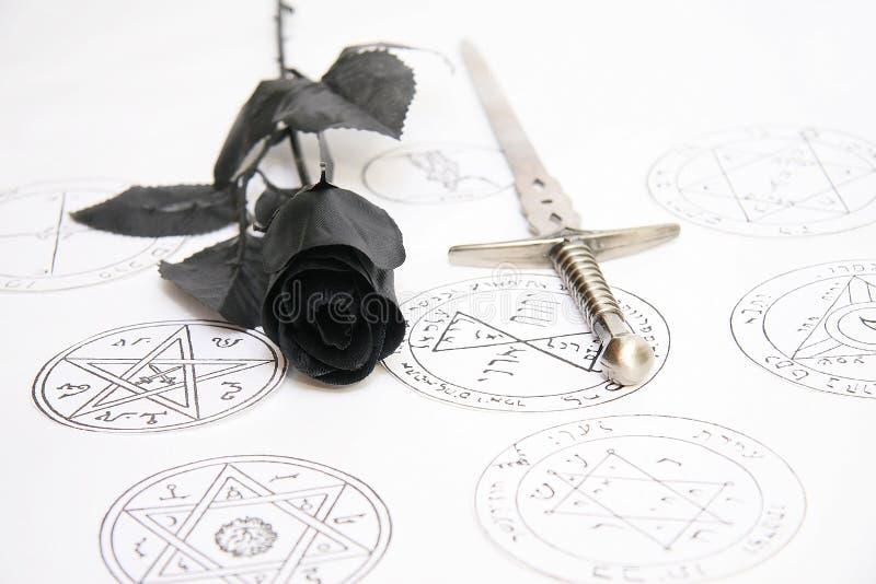 Black rose royalty free stock photography