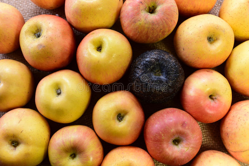 Black rotten and fresh apples. Good and Bad black Apples, unique apple stock photography