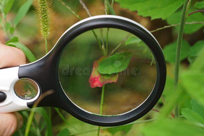 Black round magnifier over a green red leaf of a plant stock photos