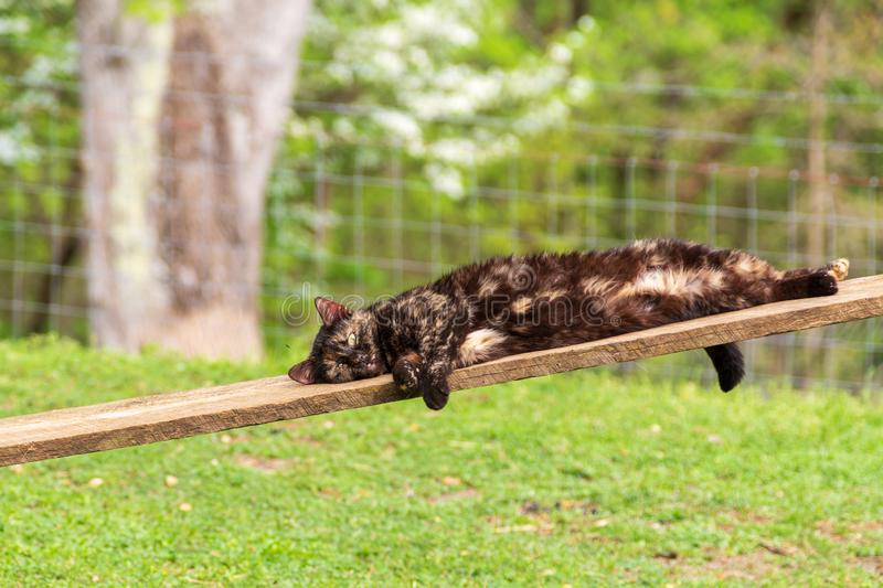Black and rust cat relaxing on a plank at the farm. A black and rust cat relaxing on a plank in the yard at the farm surrounded by green grass stock images