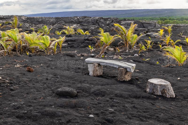 Black sand beach on Big Island of Hawaii; wooden bench, new palm trees growing in the foreground. royalty free stock images