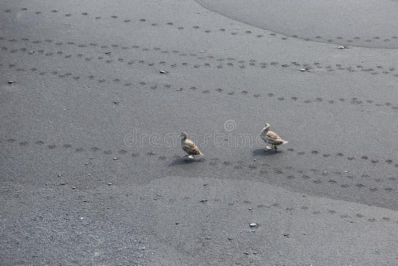 Black Beach, Vik, Iceland. The black sand beach of Reynisfjara in Iceland stock photography