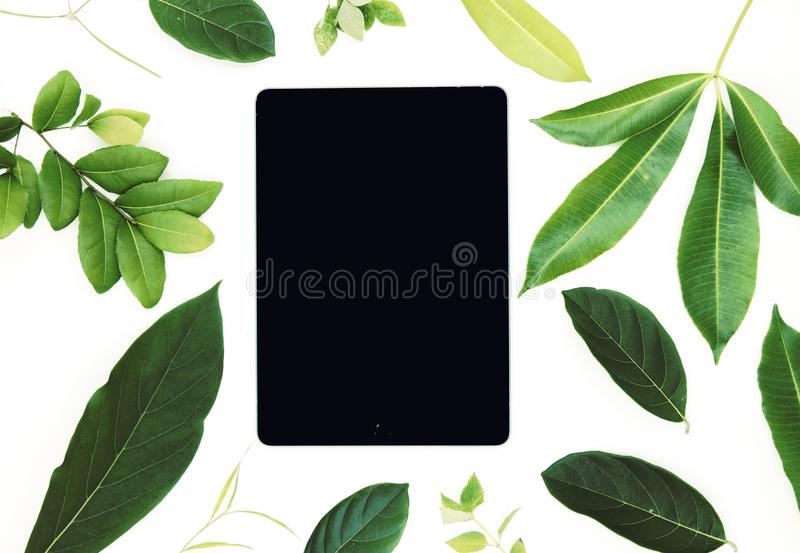 Black screen pad and vivid green leaf on white background. User interface of ipad app mockup with green foliage. Gadget pad flat lay photo. Summer decor on stock image