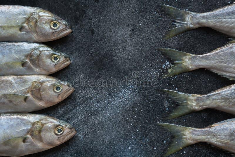 Black Sea blåfisk på svart Fiskmodell med utrymme för text ovanf?r sikt fotografering för bildbyråer