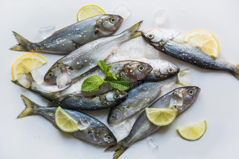 Black sea fresh bluefish on white. Fish pattern. View from above. Bluefish of black sea with lemon and mint for marinade on white background. Fish pattern. Top stock images