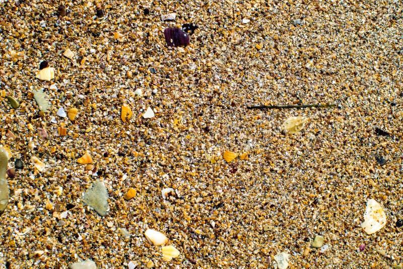 Black Sea kust som beströs med gul sand och små skal arkivfoto