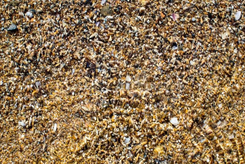 Black Sea kust som beströs med gul sand och små skal royaltyfria foton