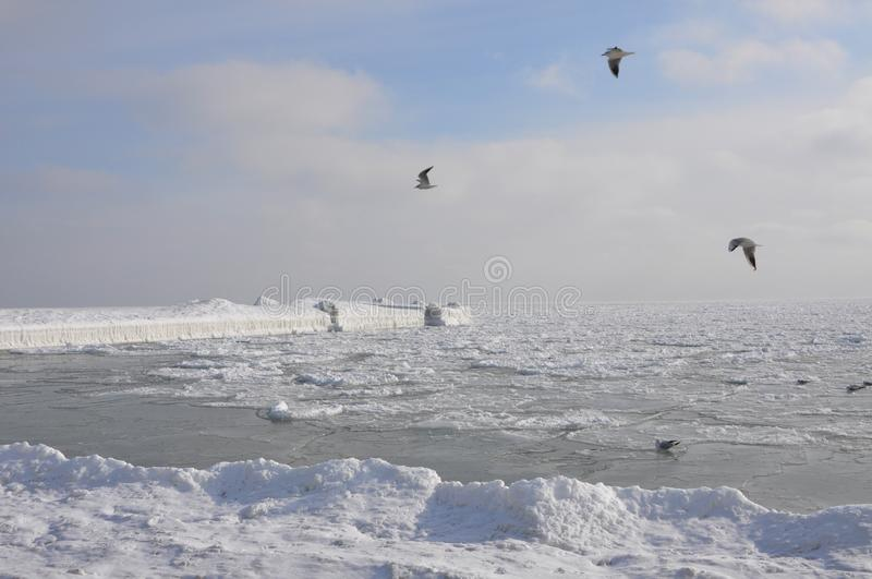 The Black Sea in winter on a clear frosty day, icebound. Frozen pier under the snow, soaring seagulls stock photos