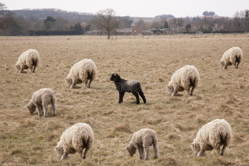 the drawbacks of prejudice against the black sheeps The ways in which race, racial prejudice, and race discrimination shape the human experience have long been of interest in psychology and the other social sciences.