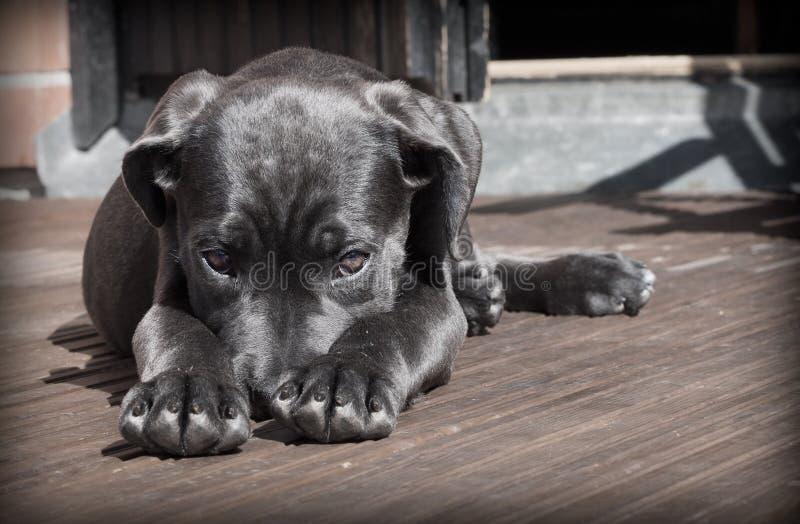 Black Short Haired Dog Free Public Domain Cc0 Image