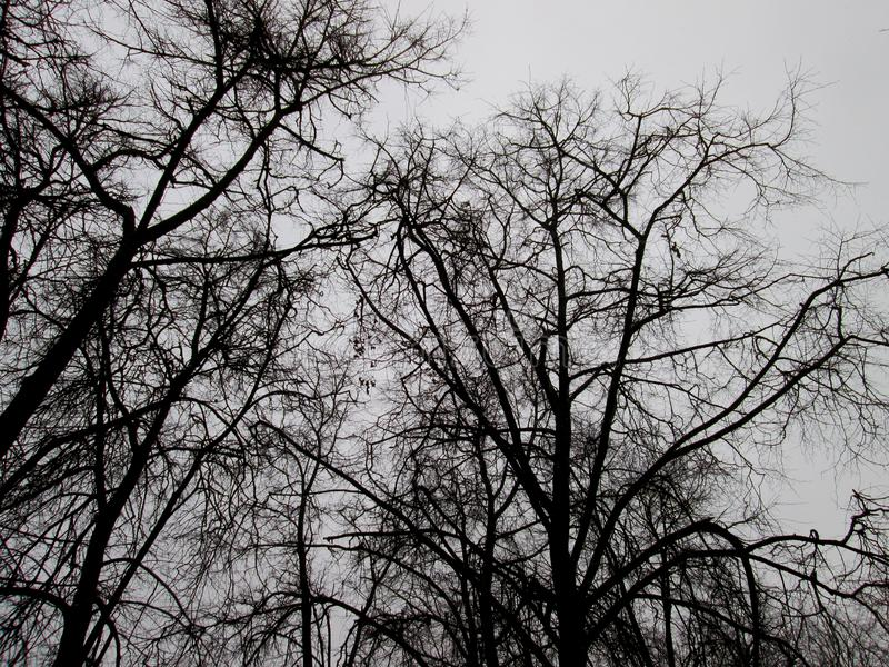 Black silhouette of bare trees royalty free stock photos