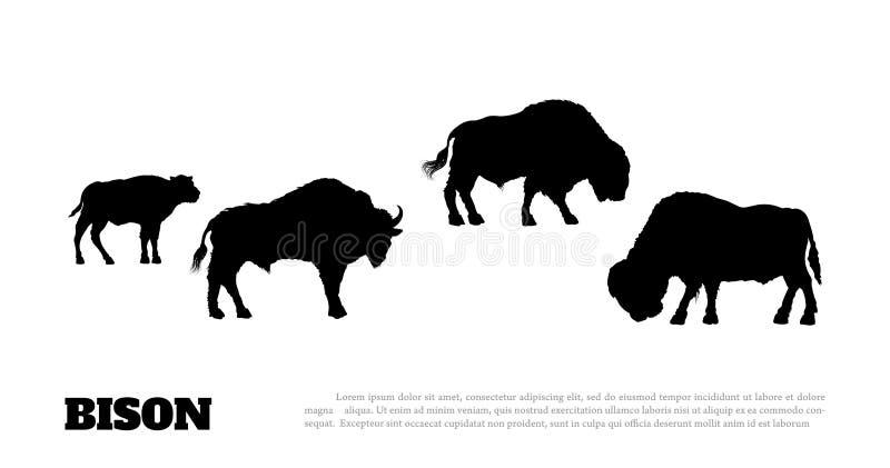 Black cuckold white bull