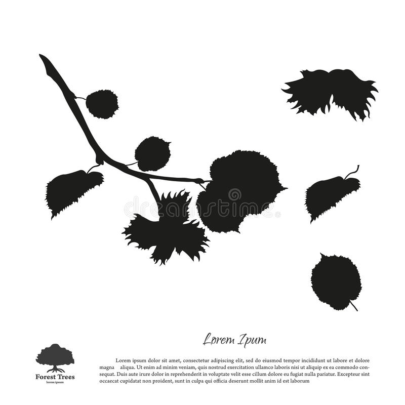 Black silhouette of branches of hazelnuts on a white background. stock illustration