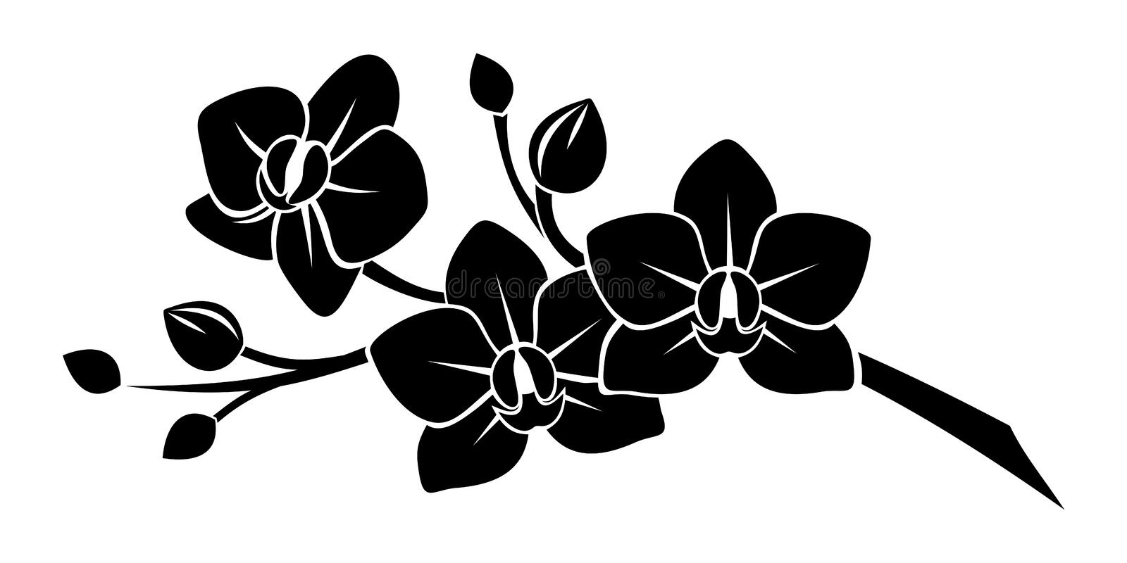 Black silhouette of orchid flowers. Black silhouette of branch with orchid flowers on a white background
