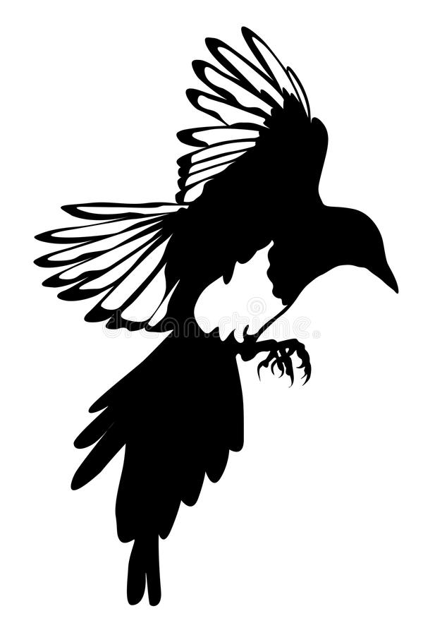 Download Black Silhouette Of Raven Isolate Stock Illustration - Image: 16085639