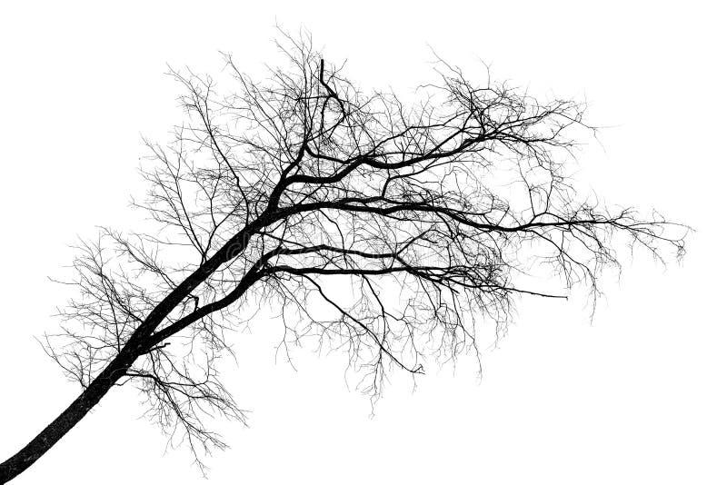 Black silhouette of tilt leafless tree on white royalty free stock image