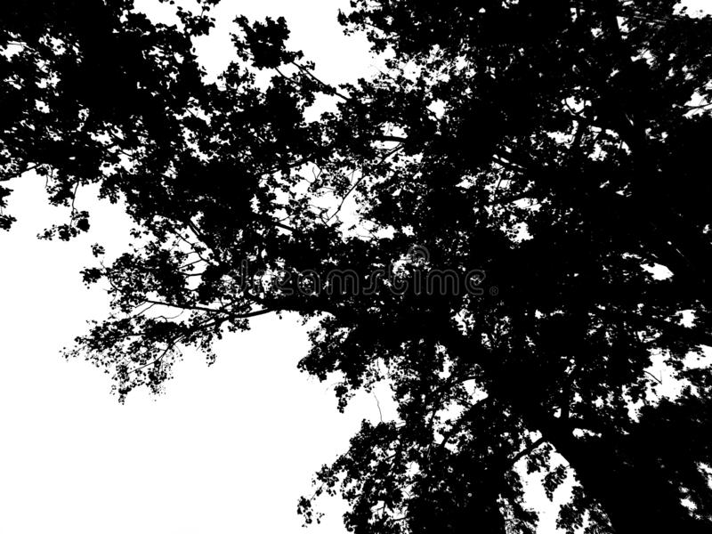 Black silhouette of tree branches on a white background stock image