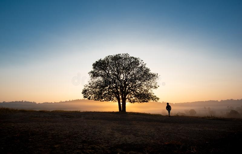 Black silhouettes, big trees and a boy in the meadow royalty free stock images