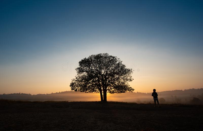 Black silhouettes, big trees and a boy in the meadow stock photography