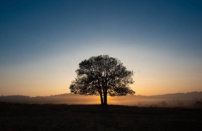 Black silhouettes, big trees in the meadow stock photo