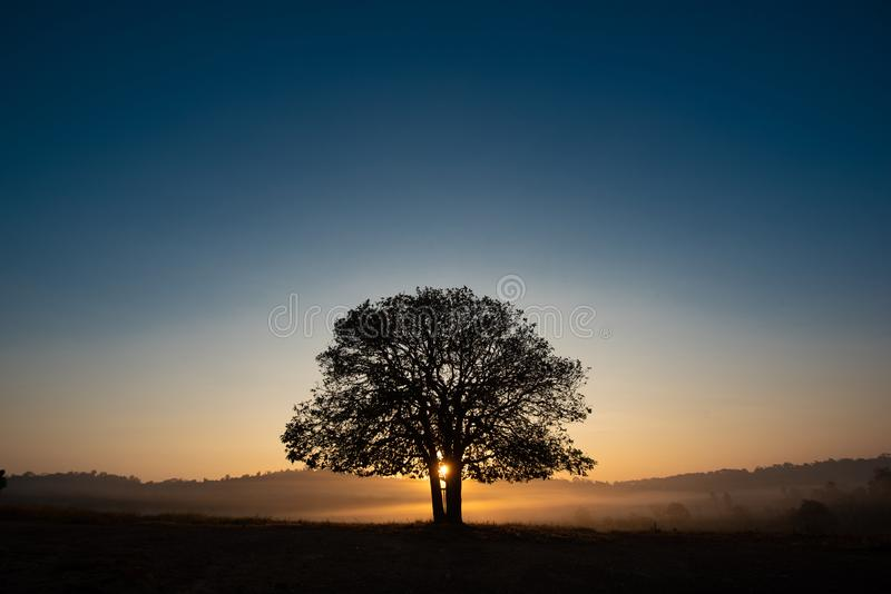 Black silhouettes, big trees in the meadow stock images