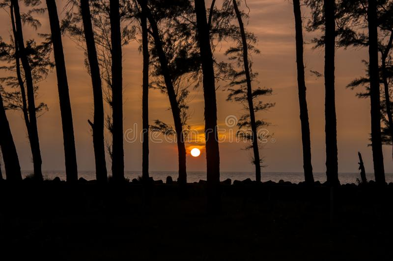 Black silhouettes of trees against the backdrop of the sunset and the bright evening sky over the ocean stock photo