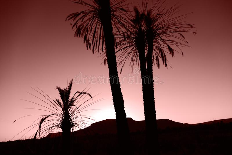 Black silhouttes of palm trees in the  desert in front of red brown sunset royalty free stock photography