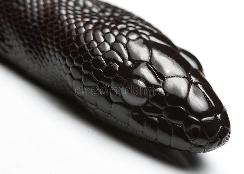 Black Snake Stock Photos