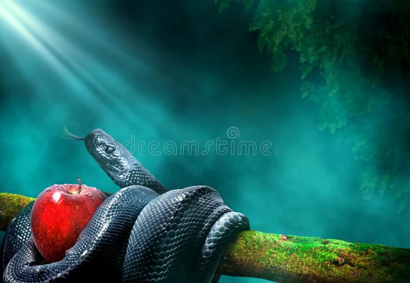 Black snake with an apple fruit in a branch of a tree stock image