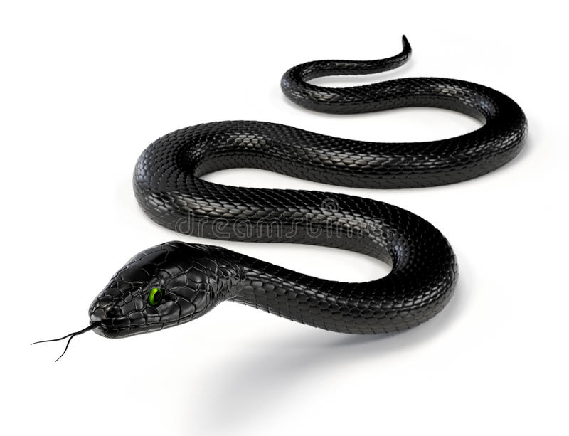 Black Snake III. Black snake with green eyes isolated on white background stock photos