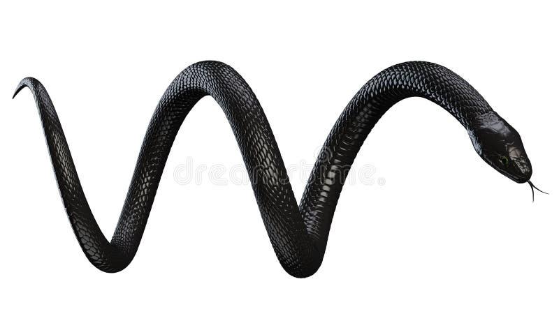 Black Snake isolated on White vector illustration