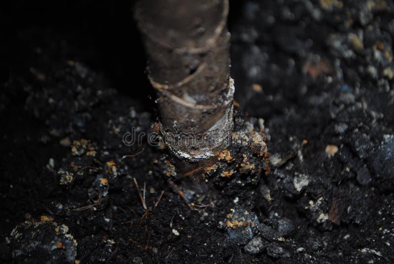 Black soil stock photos