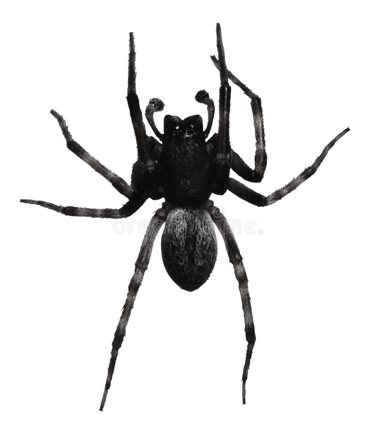 Free Black Spider Royalty Free Stock Photography - 44110677