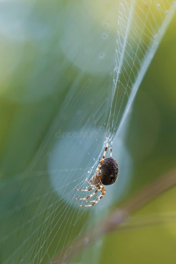 Black Spider Free Public Domain Cc0 Image