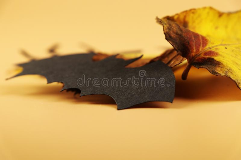 A black spider from side with autumn leave for best decoration for happy halloween. Look at it royalty free stock photo