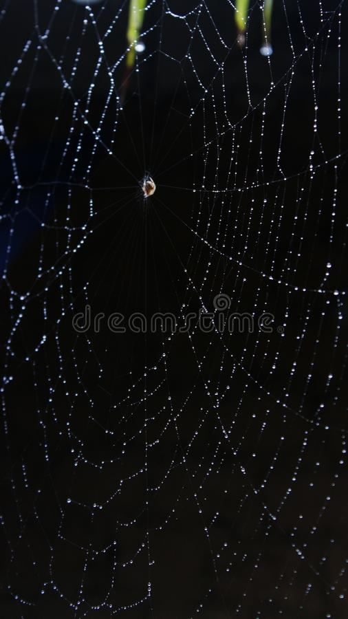 Black, Spider Web, Water, Light royalty free stock image