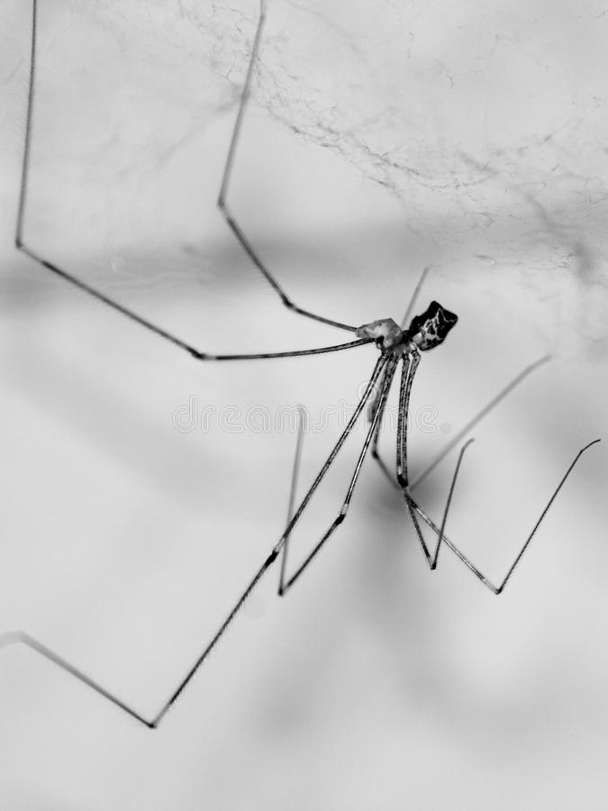 Black spider in web stock images